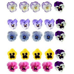 Pansy Flower Edible Wafer Paper Cake Toppers x 25