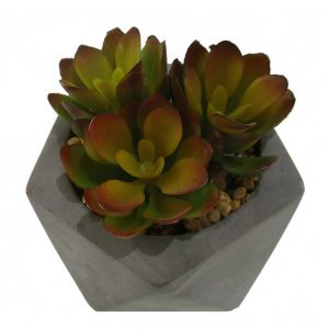 Succulent in Pot 10cm (Hex)