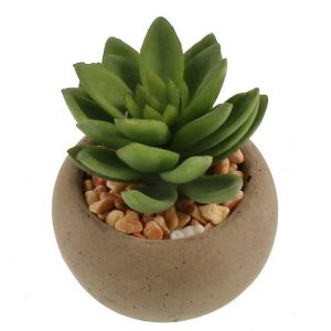 Succulent in Pot 8cm (Round)
