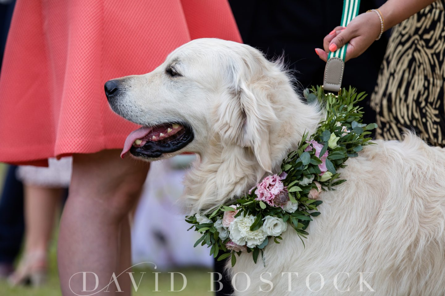 Stoke Place Hotel Wedding Dogs at Weddings
